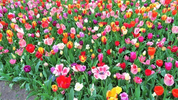 Floralia Brussels 3