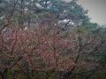 楓の枝赤い