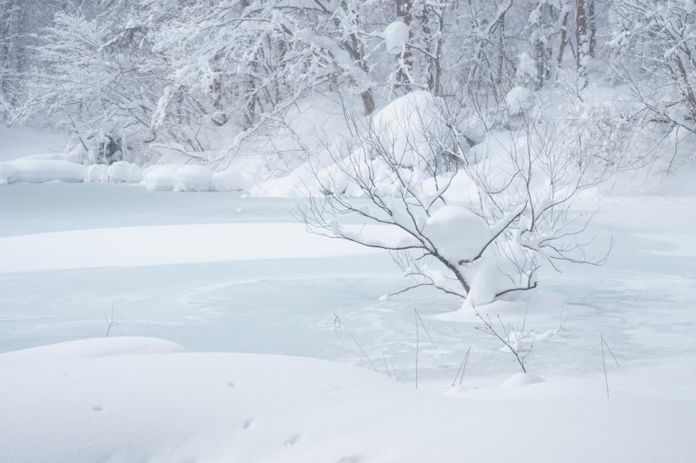 凍てつく沼
