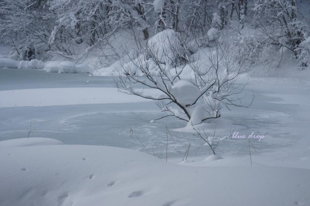 凍てつく水面*