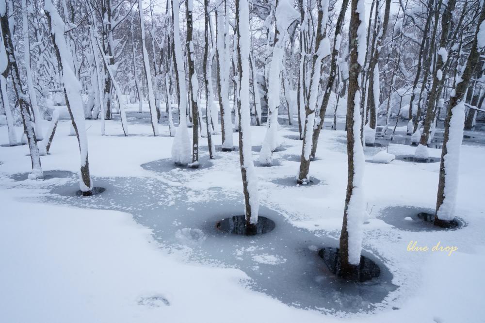 ハンノキの森