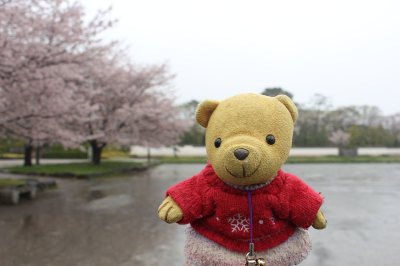駿府城公園で 桜と 雨 170411-1