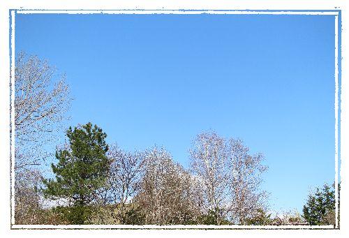 上野ファームの空