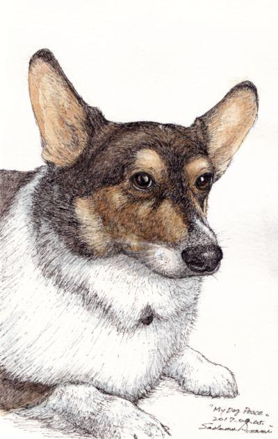 mydog 02