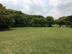 明治神宮の新緑 4n