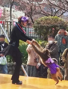 bu河津桜2_20150221_
