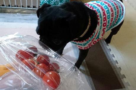 そしてトマト