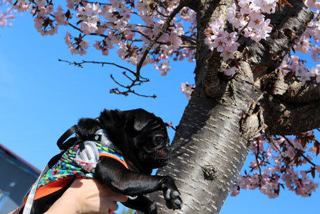 桜と一緒~ちと怖い