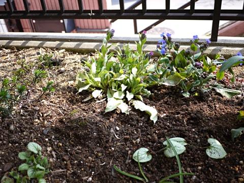 gardening299