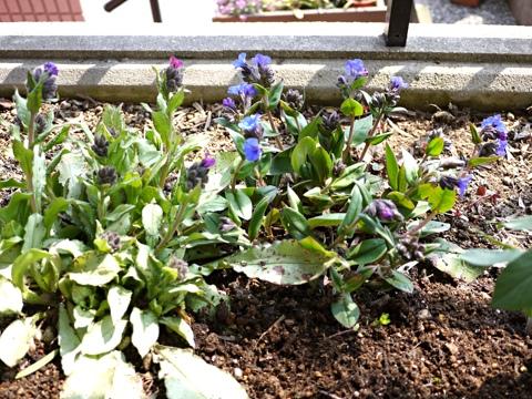 gardening300