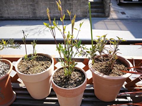 gardening303