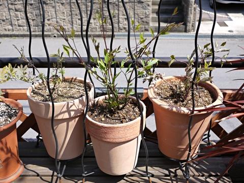 gardening304
