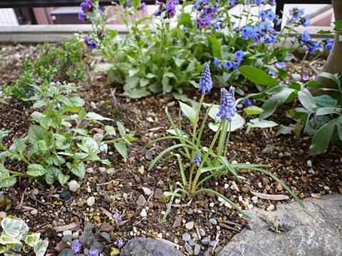gardening308