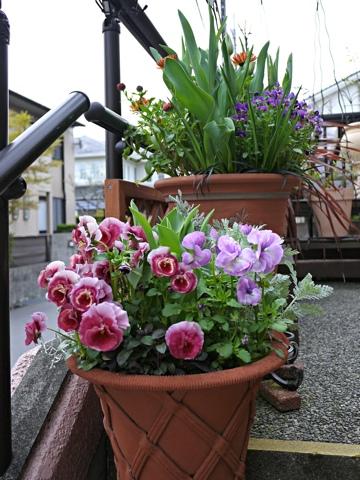 gardening310