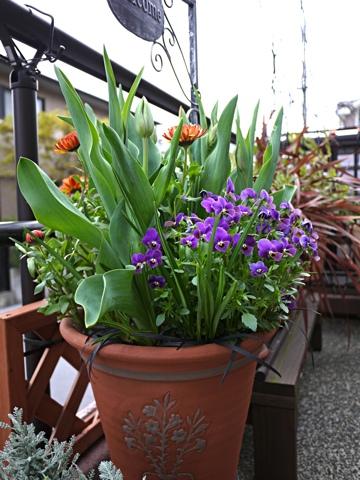 gardening311