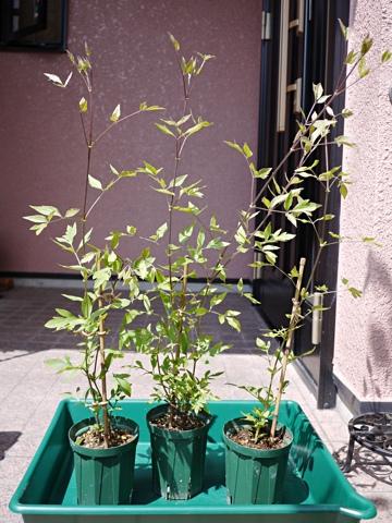 gardening322