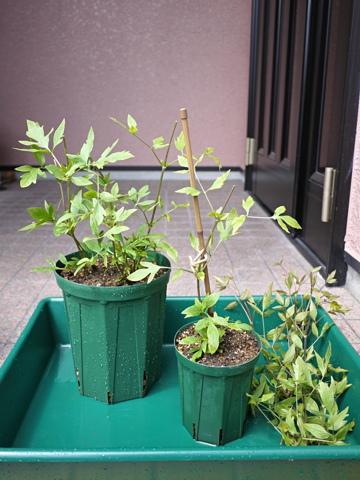gardening323