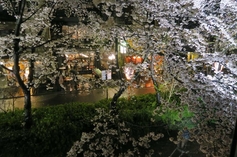 夜桜見物2