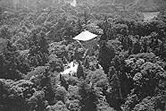 笠森寺自然林