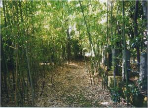 新田神社竹藪