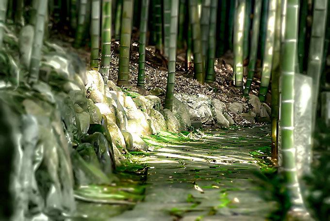 竹と石畳ロケーション