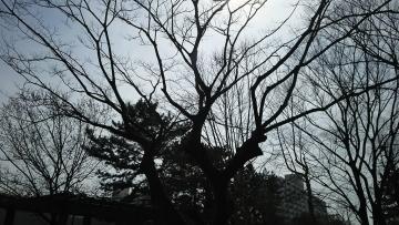 DSC_1500.jpg