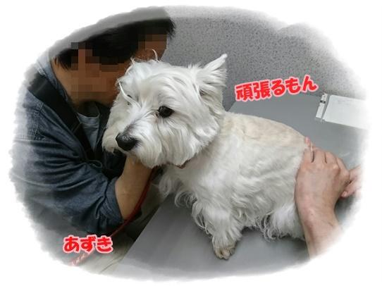 azukiai10.jpg