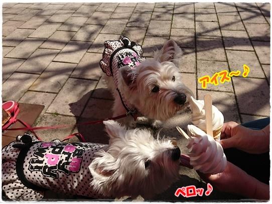 bihoku5_201704292231457bc.jpg