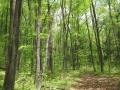 若葉の雑木林