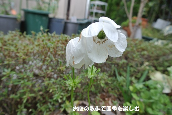 anemone16.jpg