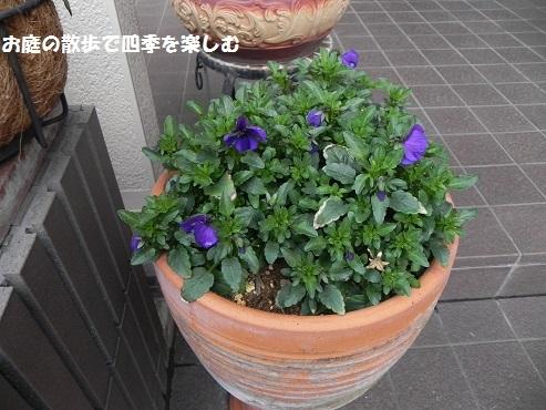 biora39_2017032114200988a.jpg