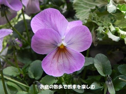 biora47_201703211419318c9.jpg