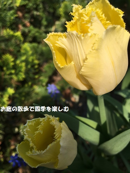 cyu-rippu24.jpg