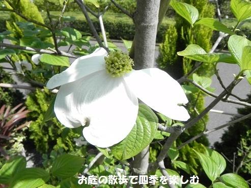 hanamizuki30_20170430113956855.jpg