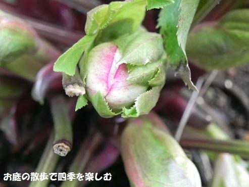 kurisumasuro-zu87.jpg