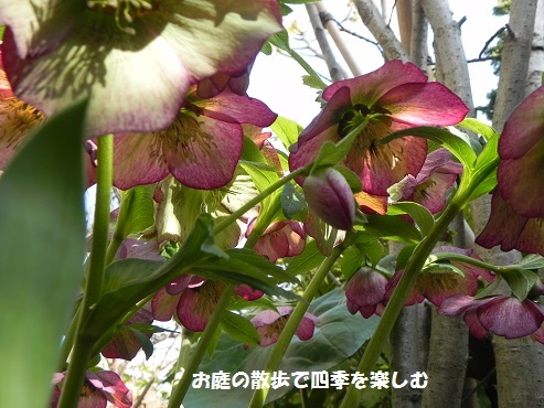 kurisumasuro-zu89_201703151043208e6.jpg