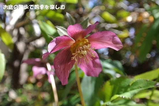 kurisumasuro-zu96.jpg