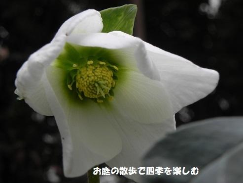 kurisumasuro-zu97.jpg