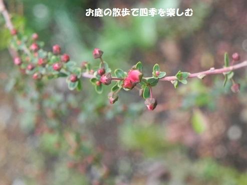 niwa224.jpg