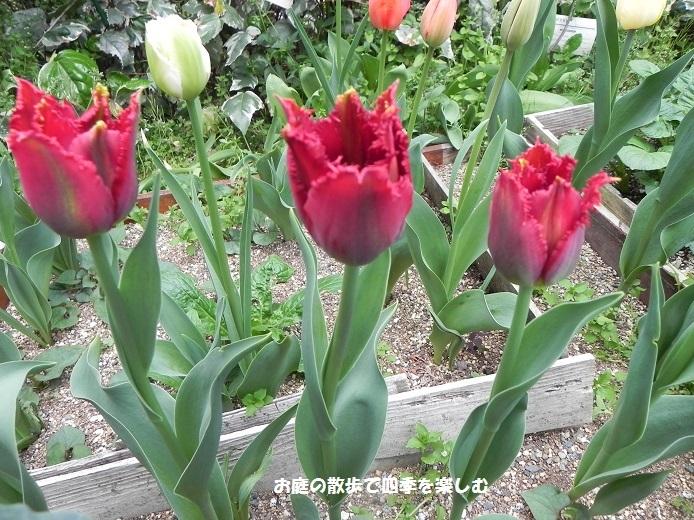 niwa249.jpg