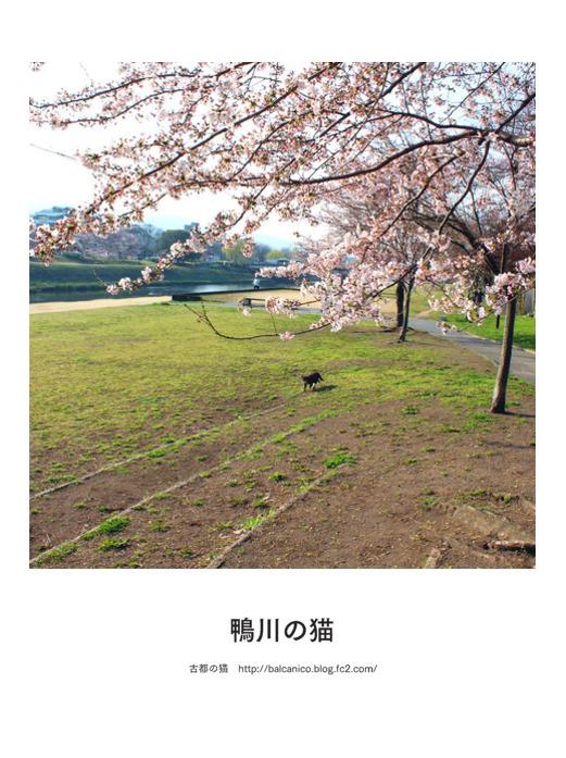 kamogawa20170406.jpg