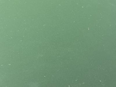 猪肉とダイコンの味噌煮