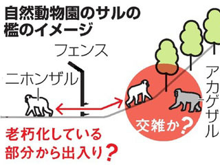 高宕山自然動物園の破れ檻のイメージ