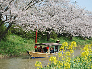 近江八幡の水郷めぐり船