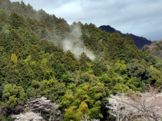 近江八幡市の安土山で撮影されたヒノキ花粉の飛散