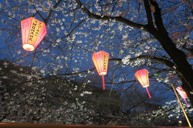 2017年 目黒川の桜(10)