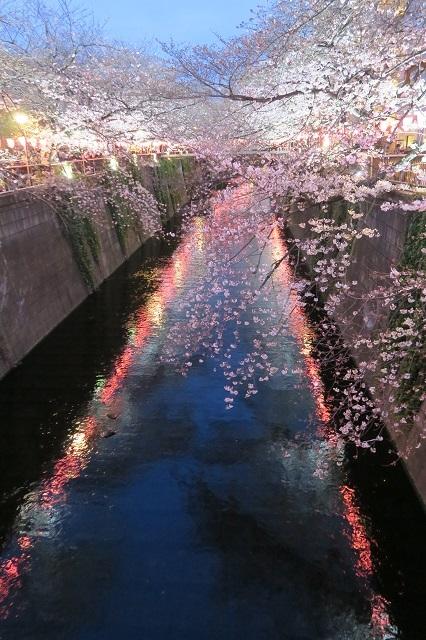 2017年 目黒川の桜(12)