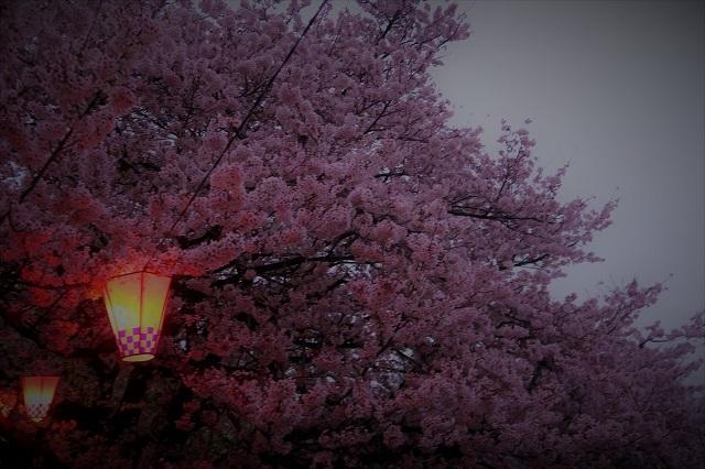 2017権現堂堤さくら祭り 夕暮れの桜(6)