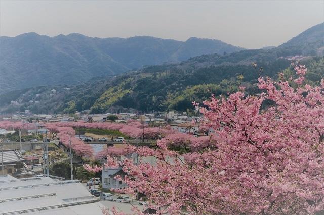 2017河津桜 花見おろし台からの風景(5)