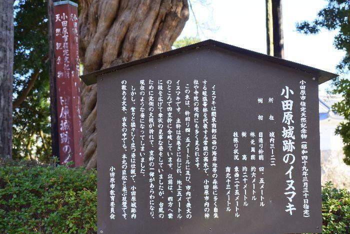 043-小田原城イヌマキ看板
